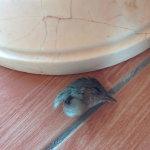 Это мы не ели, это то, что бывает с воробьем, когда он встречается с потолочным вентилятором (